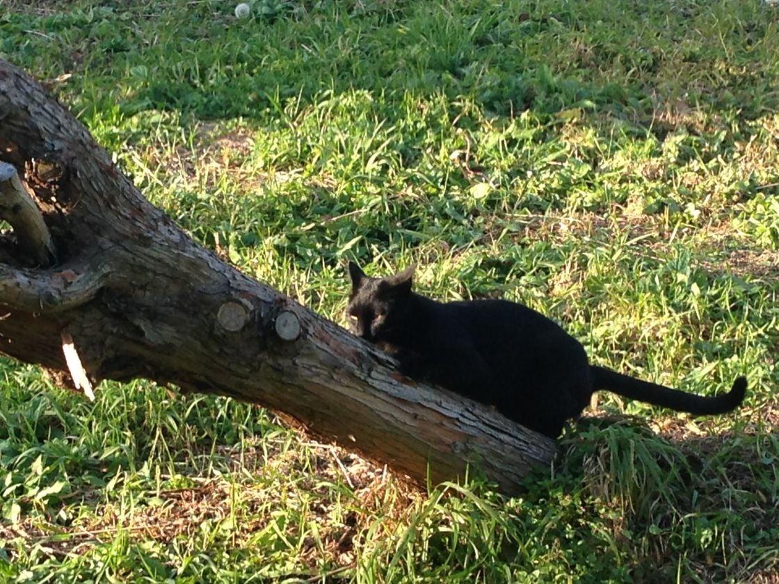 黒猫です。
