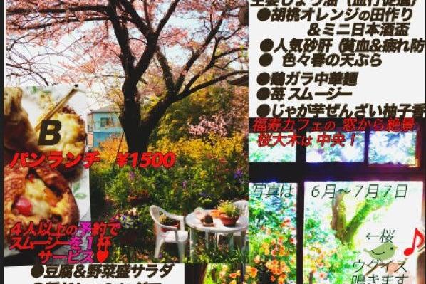 竹林、桜の大木のある癒しの庭を見ながら、ほっと一息;福寿カフェ の写真