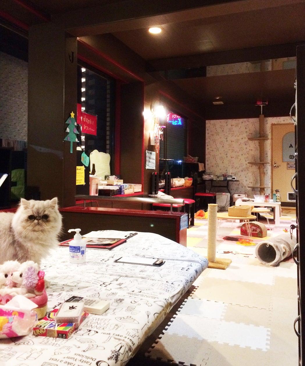 猫つき癒し空間(スタッフ1名付) の写真