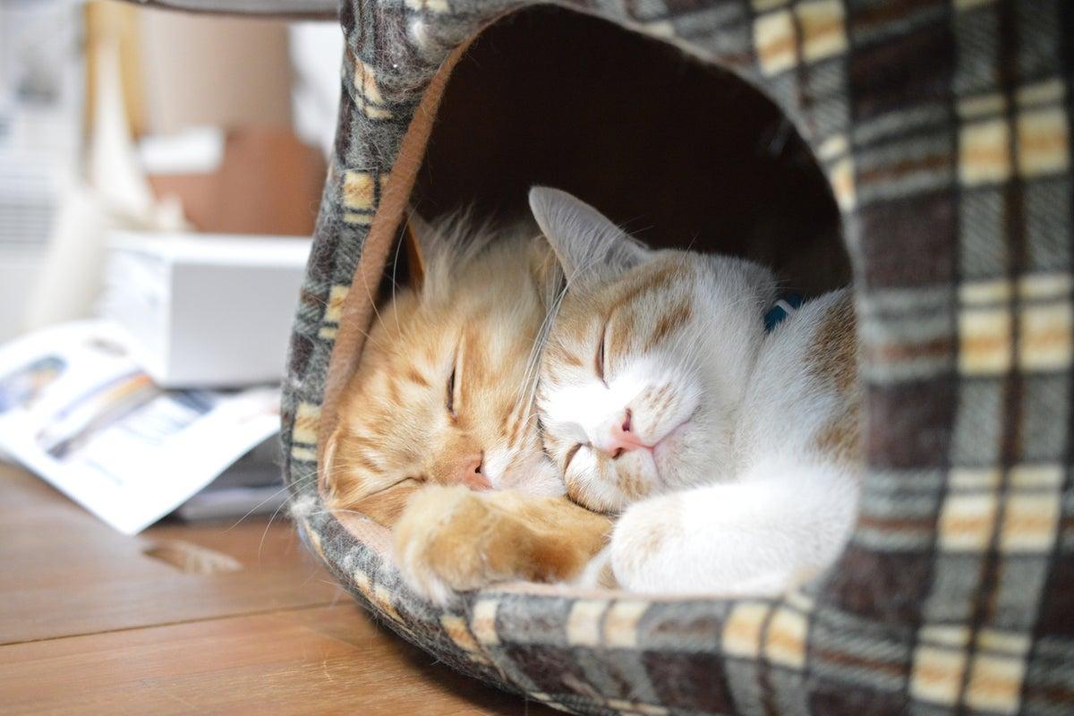 猫のいるデザインスタジオの空きスペースです(^ω^) の写真
