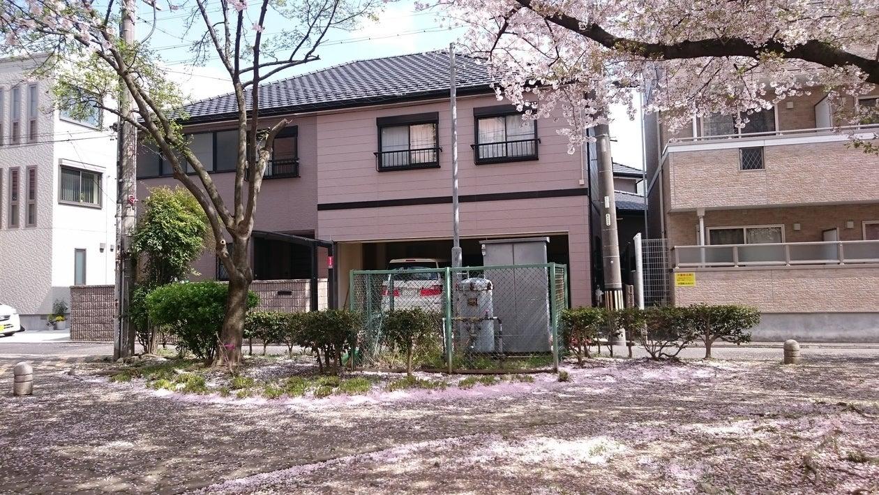 目の前の公園から、桜の季節に撮影した外観
