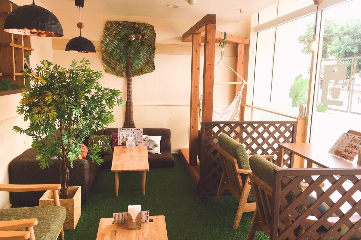 【カフェ貸切‼︎那覇市首里のおしゃれなカフェ】女子会やセミナー、ワークショップ等の利用にいかがでしょうか!? の写真