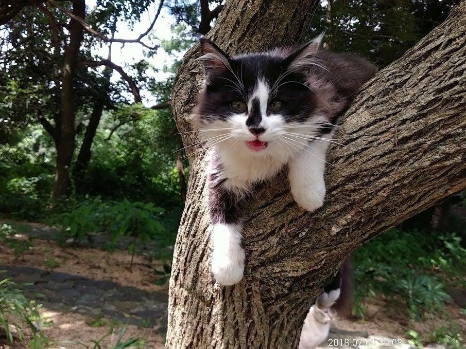 いつの間にか住み着いた猫たちがガーデンにいます。 抱っこしたり、一日中、遊んでください。