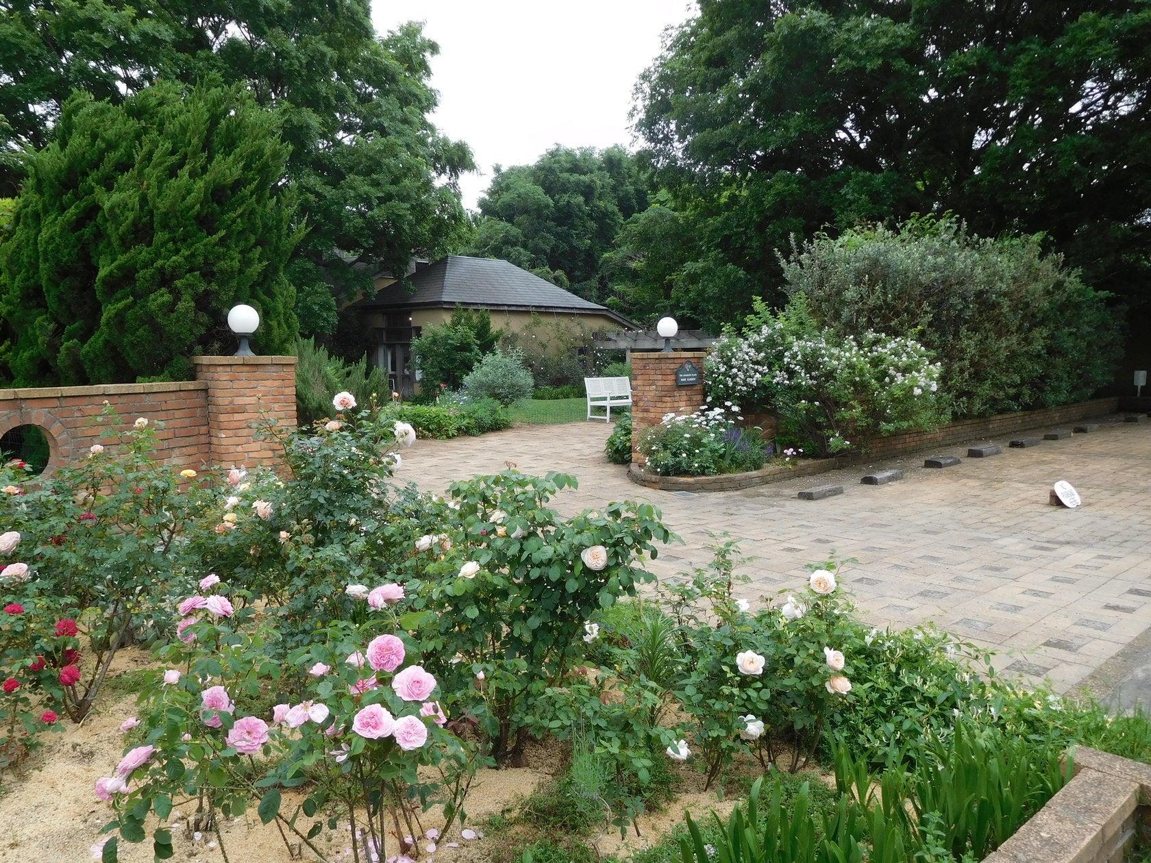 350品種、2500本のバラが植わっています。