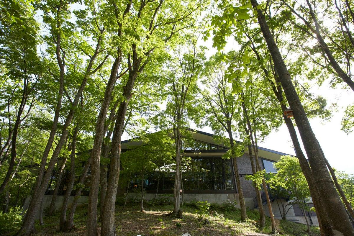 【北信州】野尻湖畔の『森』をお貸しいたします の写真