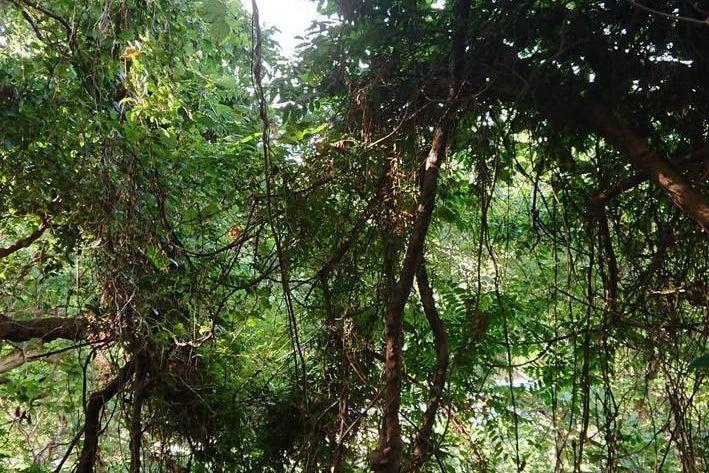 FOREST BIRD JUDOハウス の写真