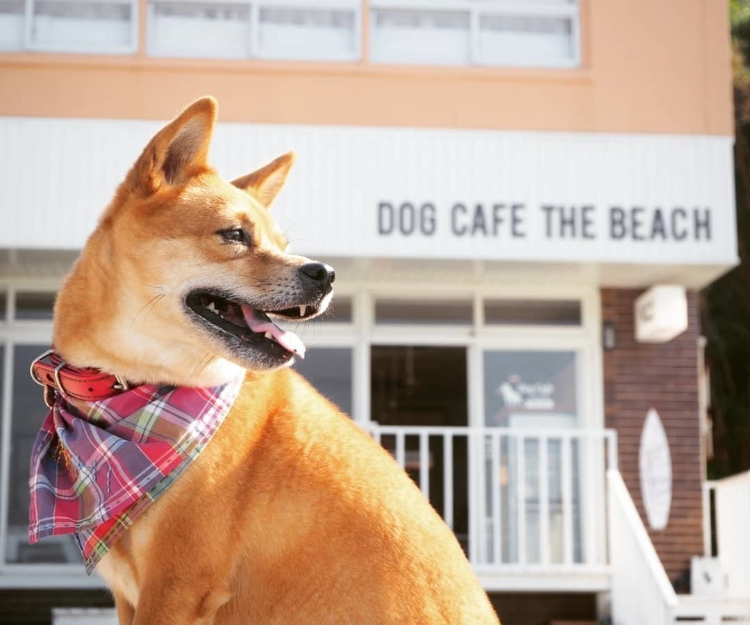 愛犬と一緒に貸切パーティー(DOG CAFE THE BEACH / ドッグカフェ ザ ビーチ) の写真0