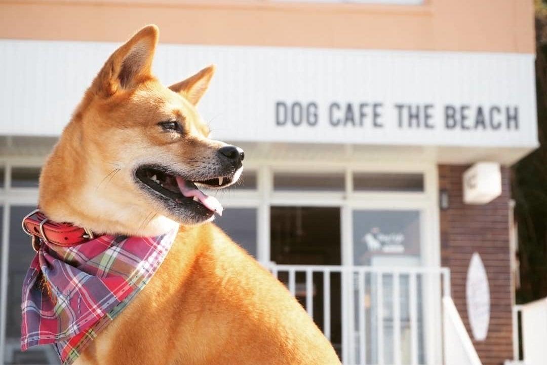 愛犬と一緒に貸切パーティー の写真