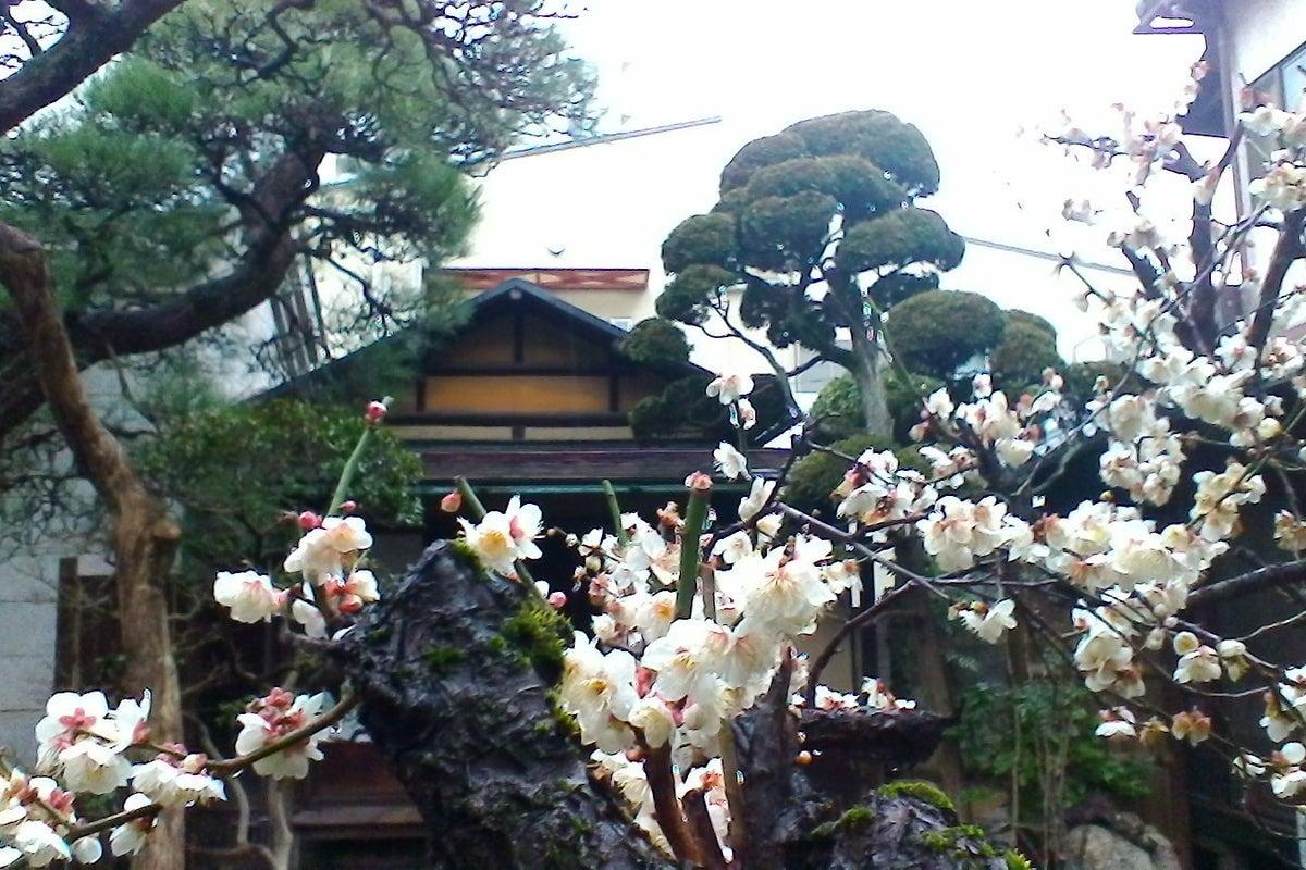 市川駅から徒歩5分。離れ座敷や苔の庭を含め100年の古民家です。飼猫が出入りします の写真