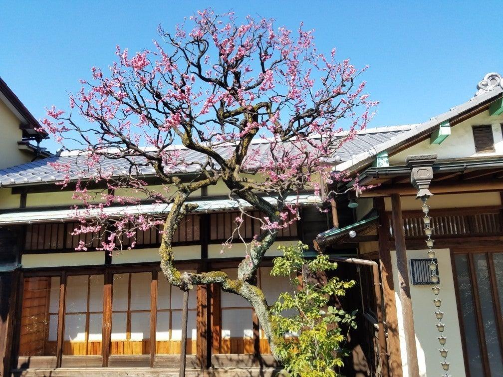 【巣鴨・山手線内側】築63年の古民家。高い天井。季節の花咲くお庭。縁側での撮影は大人気。写真撮影、ロケ撮影、会議・研修などに。