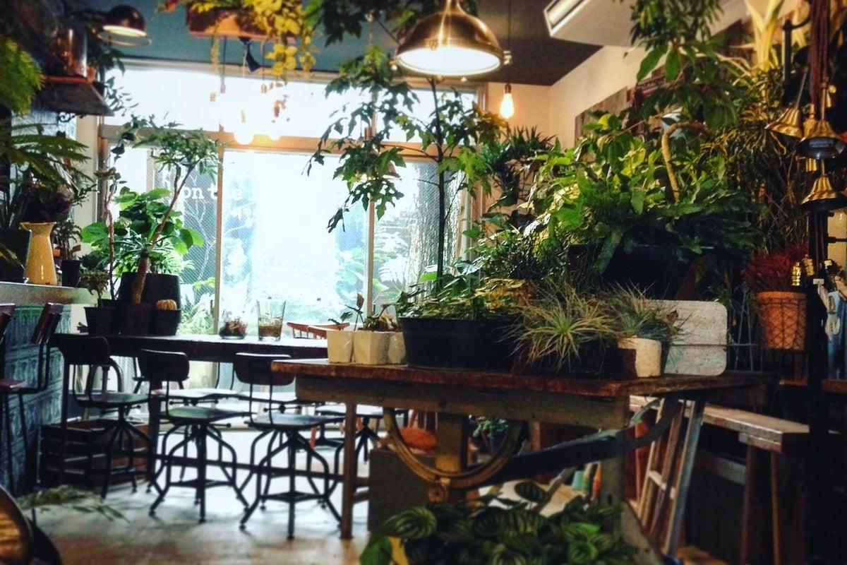 on the leaf 防音設備付きのカフェ空間でライブや撮影可能。植物に囲まれた店内で、テラス付きです。 の写真