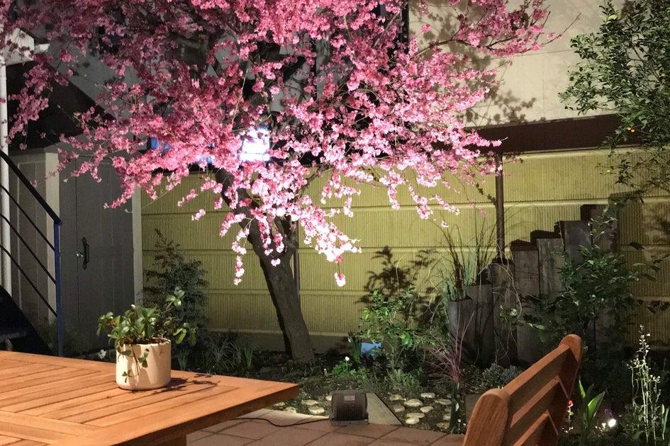 【豊島園・練馬春日町・平和台】インドア花見におすすめ!庭付きカフェスペース 女子会・ママ会・誕生日会・撮影 の写真