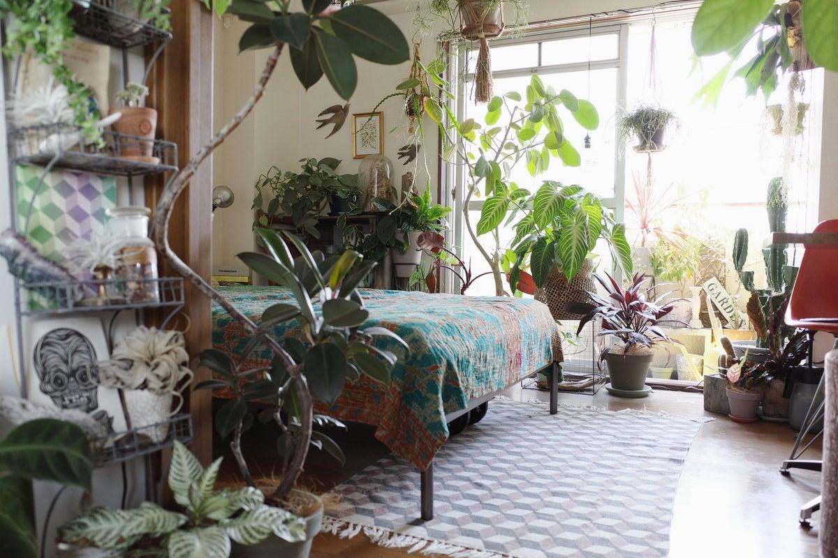 100種類以上の植物が溢れる都心のグリーンルーム【作品撮影/商品撮影/SNS/小規模インタビュー】 の写真