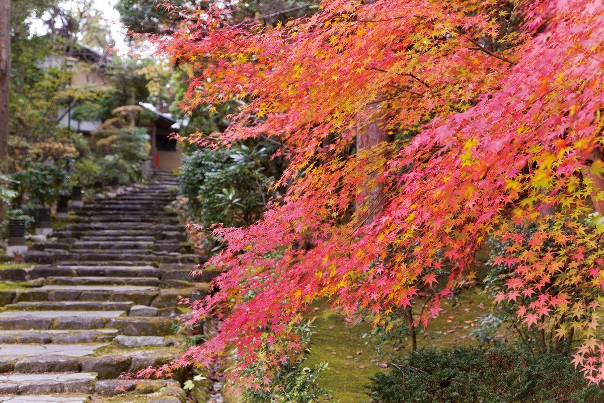 【奈良百楽荘・さつき】日本庭園のある料亭の離れ 撮影会におすすめ! の写真
