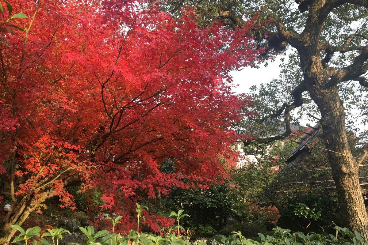 築100年以上!寺造りの日本家屋。成人式の前撮りや七五三の撮影、コスプレ撮影などに! の写真