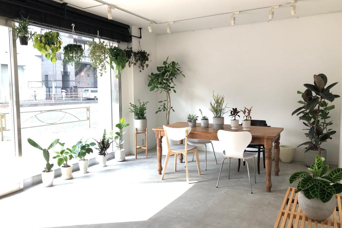 植物と古材のカウンターを基調としたお洒落な空間。キッチンスタジオ、女子会、ママ会、撮影などに の写真