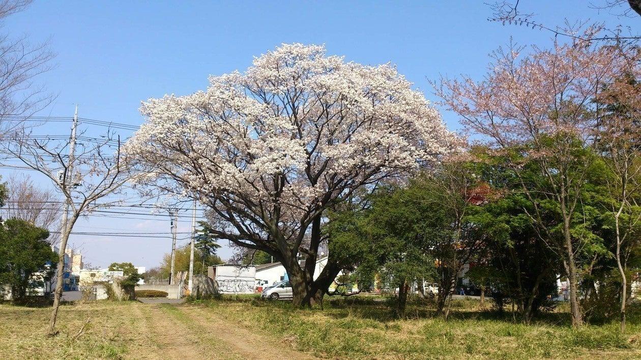 様々なイベントや撮影が行えるスペース 凪桜 nagi-sakura の写真