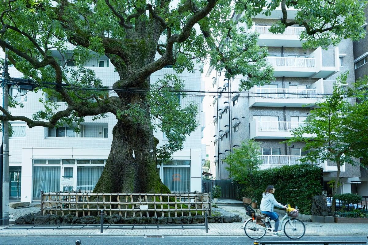 【発酵するカフェ麹中】樹齢600年の大楠が目の前のカフェ。懇親会やセミナー、ワークショップなどに。 の写真