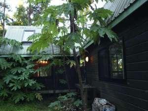 ジャングルに突き出した形のカフェテラス付ログハウス!洗礼された異空間!パーティーやイベントに最適!(Nakadaki Art Village Rainbow valley(中滝アートヴィレッジ)) の写真0