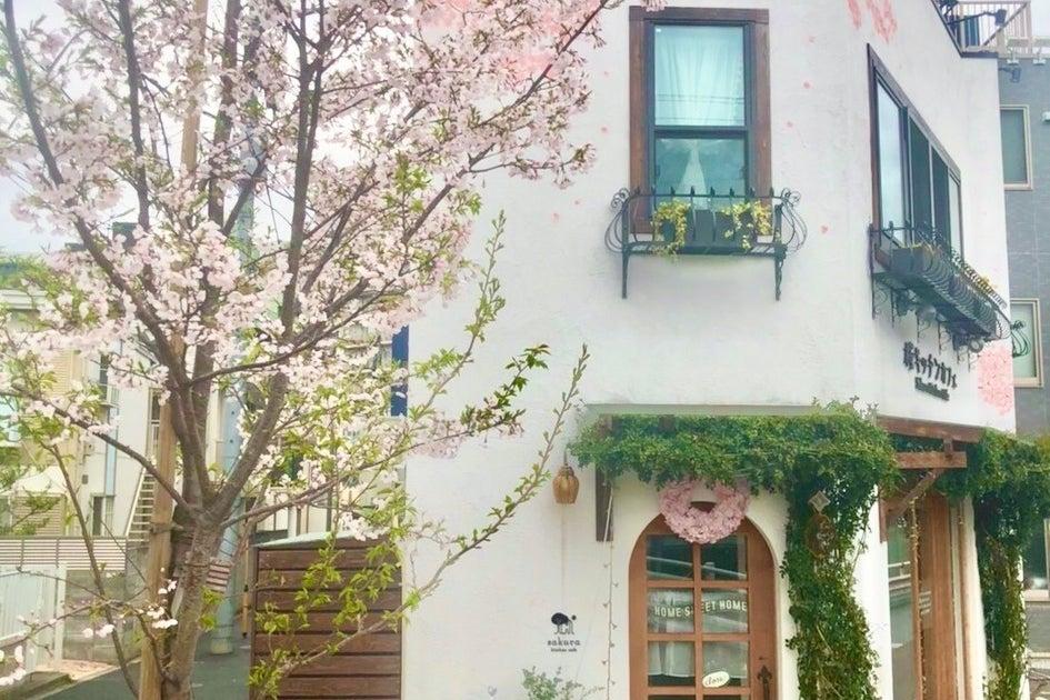 【桜キッチンカフェ】屋上テラス付き!木の香る癒しの一軒屋。外庭でのPRイベント、カフェ貸し可、55inchTVモニター有り の写真