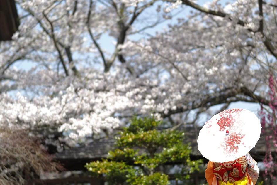 桜の絶景を独り占めしてみませんか?インドア花見眺望スペース の写真