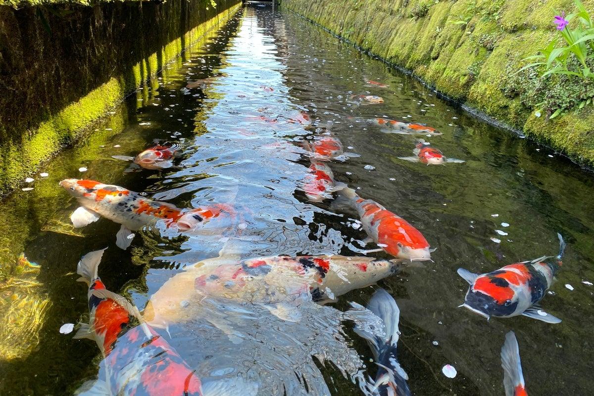 鯉が泳ぐ城下町にある貸しスタジオ 貸切忘新年会・女子会からイベントなど の写真