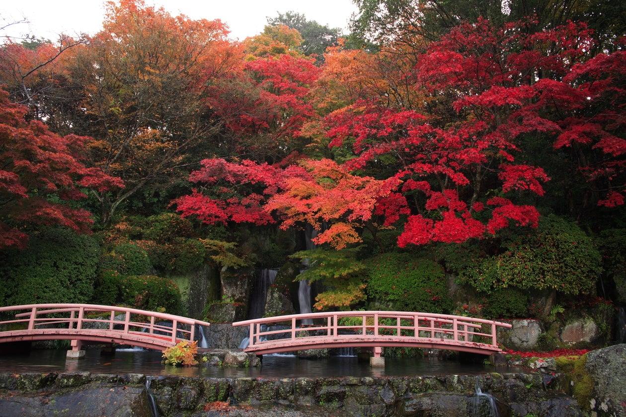 公益財団法人 陽光美術館 日本庭園 慧洲園 の写真