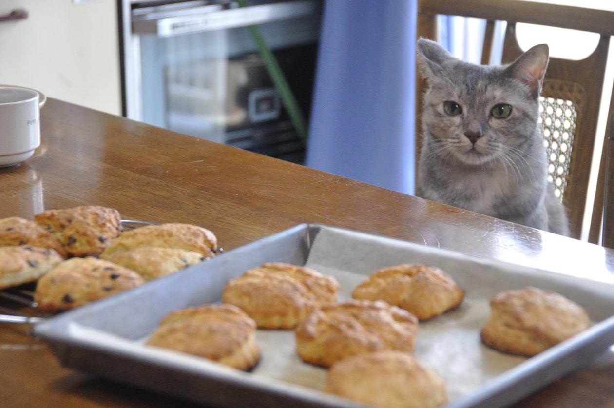 猫と一緒にお菓子作り。 人見知りなので、抱っこして撮影などは出来ません! ごめんなさい・・・